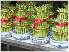 bamboo_plants-1.27040053_std.jpg